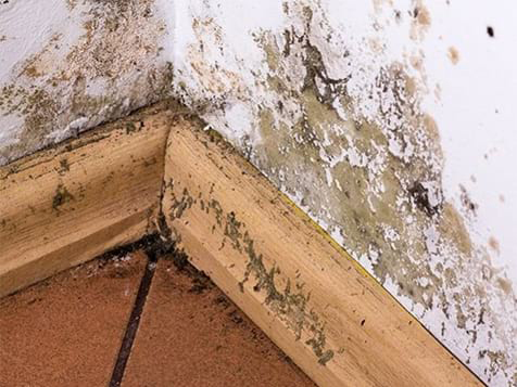 Best Option Restoration Franchise - Mold Remediation