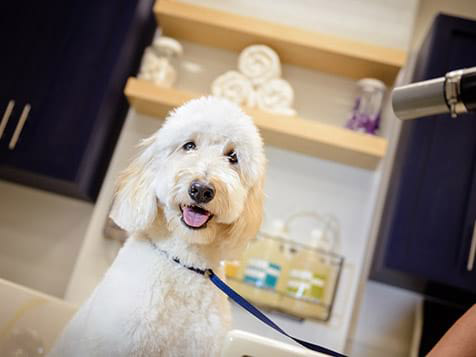 Scenthound Franchise Dog Grooming