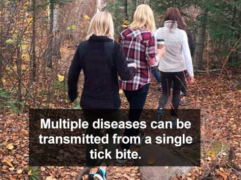 Mainely Ticks Franchise - multiple diseases can come from 1 tick bite