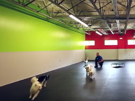 Dogtopia Franchise Dog Daycare
