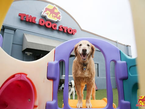 The Dog Stop Franchise Playground