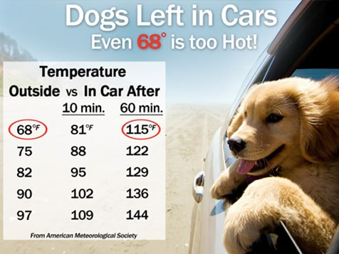 Shady Paws Pet Parking Franchise - Temperature Chart