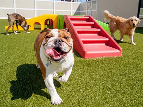 K-9 Resorts Franchise Play Yard