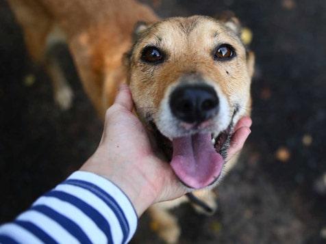 Instinct Dog Behavior & Training - Happy Dog