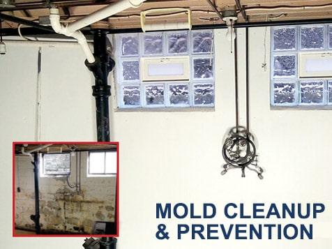 The Basement Doctor Franchise - Mold