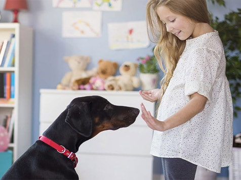 Canine Dimensions Franchise In-Home Dog Training