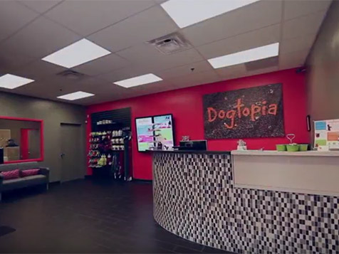 Dogtopia Franchise Front Desk