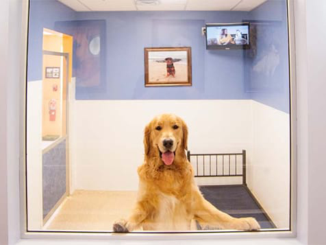 K-9 Resorts Franchise Executive Room
