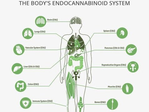 Purely Natural CBD Franchise - Human Physiology