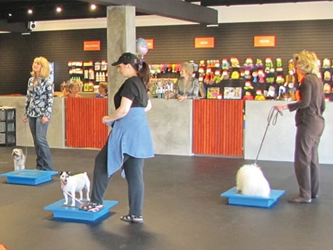 Zoom Room Dog Training Franchise Class