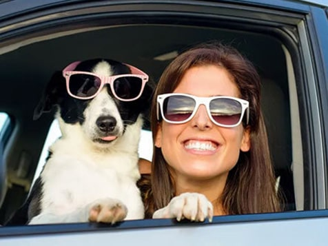 Become a Shady Paws Pet Parking Franchisee