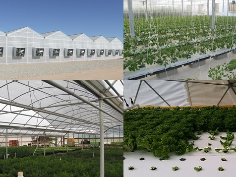 Got Produce Franchise Greenhouses