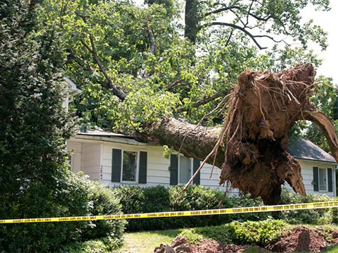 Best Option Restoration Franchise Fallen Tree