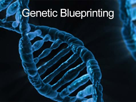 RX2Live Franchise - genetic blueprinting
